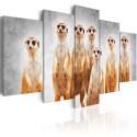 Tableau - Meerkats