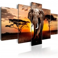 Tableau  Elephant Migration