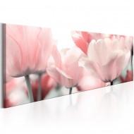 Tableau  Pink Tulips