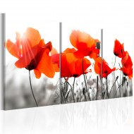 Tableau  Charming Poppies