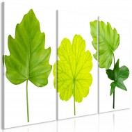 Tableau  Green Leaves (3 Parts)
