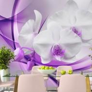 Papier peint  Orchid blossom in violet