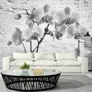 Papier peint  Orchid in Shades of Gray