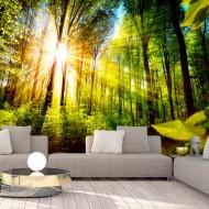 Papier peint  Forest Hideout