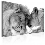 Tableau  Lions Love