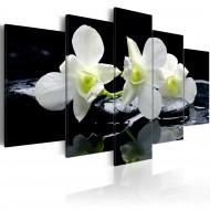 Tableau  Melancholic orchids