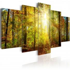 Tableau - Mystical Forest