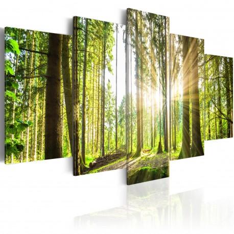 Tableau  Forest Kingdom
